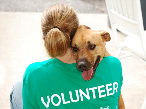 volunteeranimalshelter.jpg