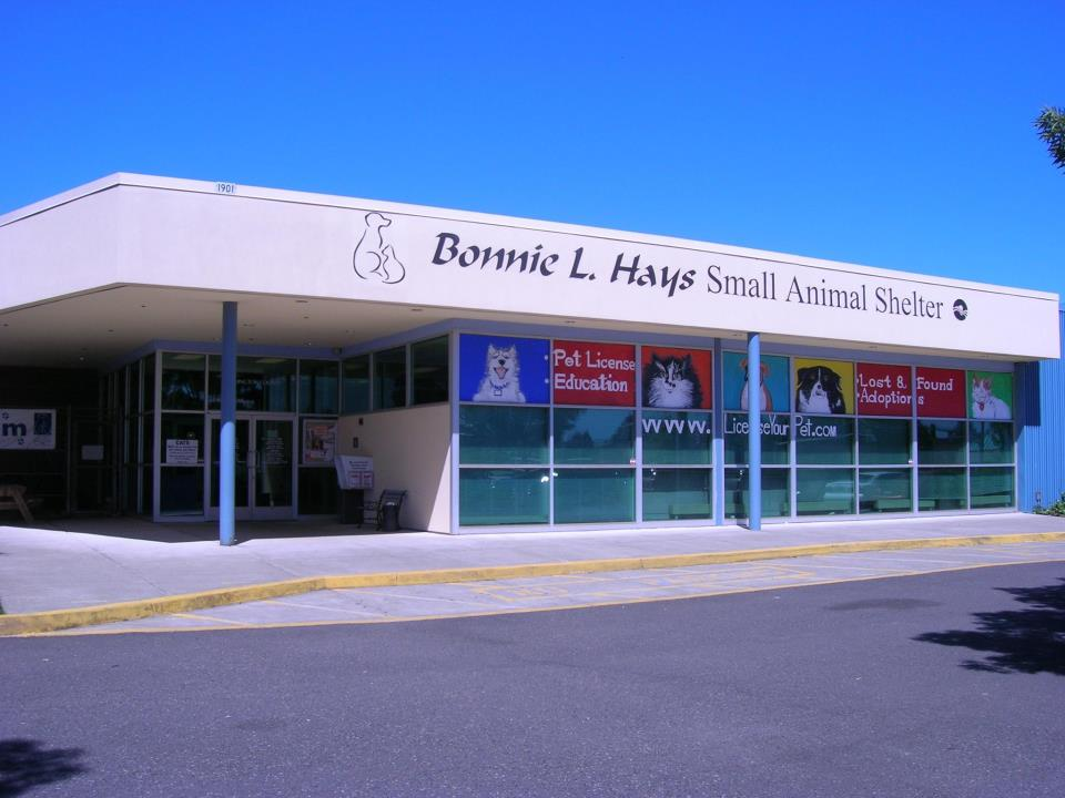 bonnie-hays-shelter.jpg