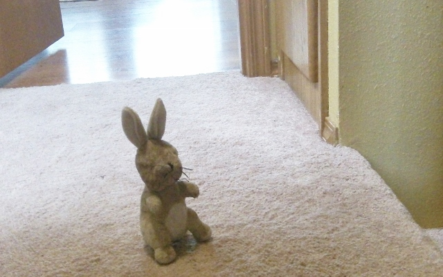 Ah, if stuffies could talk.  This bunny clearly got left standing … as usual, Rox must've been called away on urgent business.