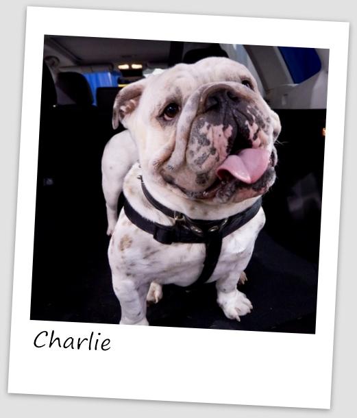 Charlie7 (427x640).jpg