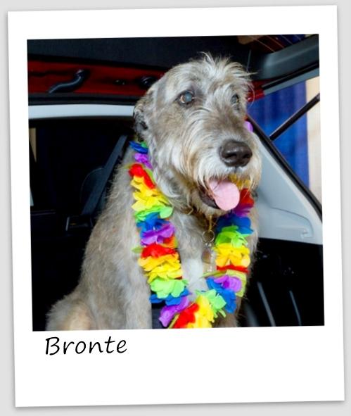 Bronte1 (427x640).jpg