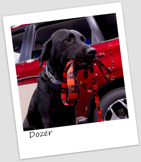 Dozer4 (427x640).jpg