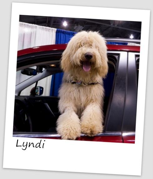 Lyndi2 (427x640).jpg