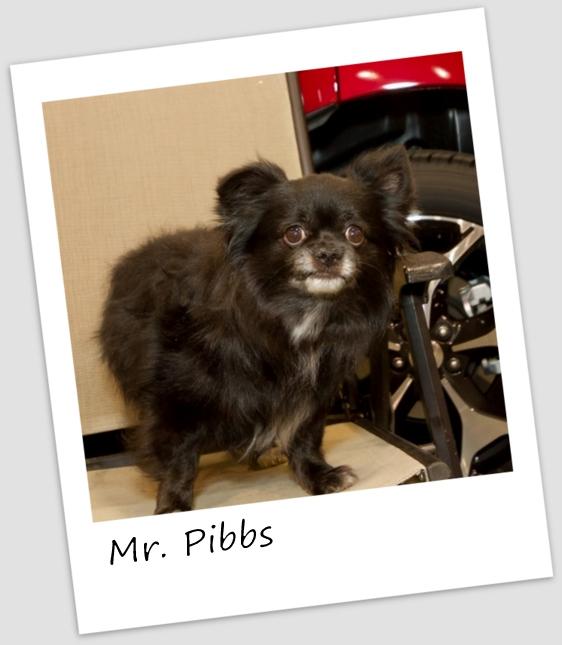 MrPibbs4 (427x640).jpg