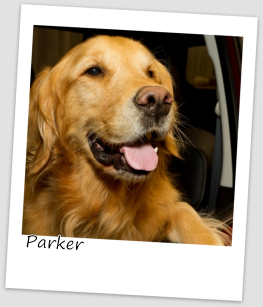 Parker2 (427x640).jpg