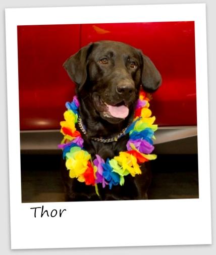 Thor6 (427x640).jpg