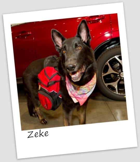 Zeke1 (427x640).jpg