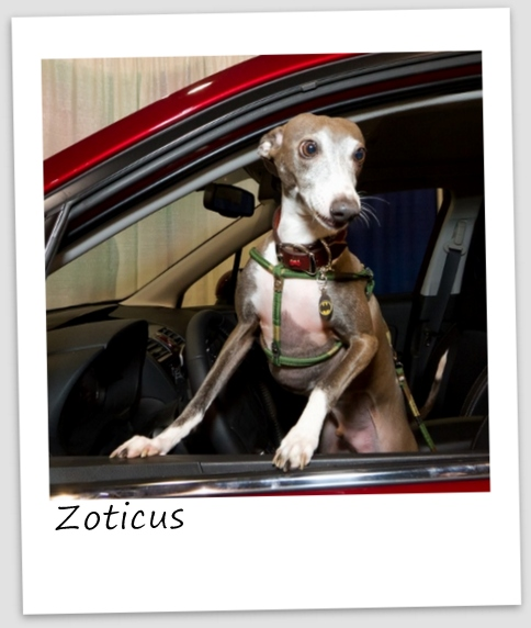 Zoticus6 (427x640).jpg