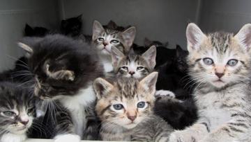 kittens_adopt.png