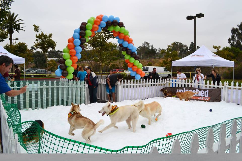 petco_snow_day.jpg