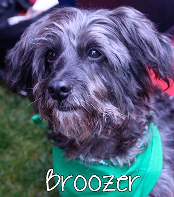 broozer.jpg