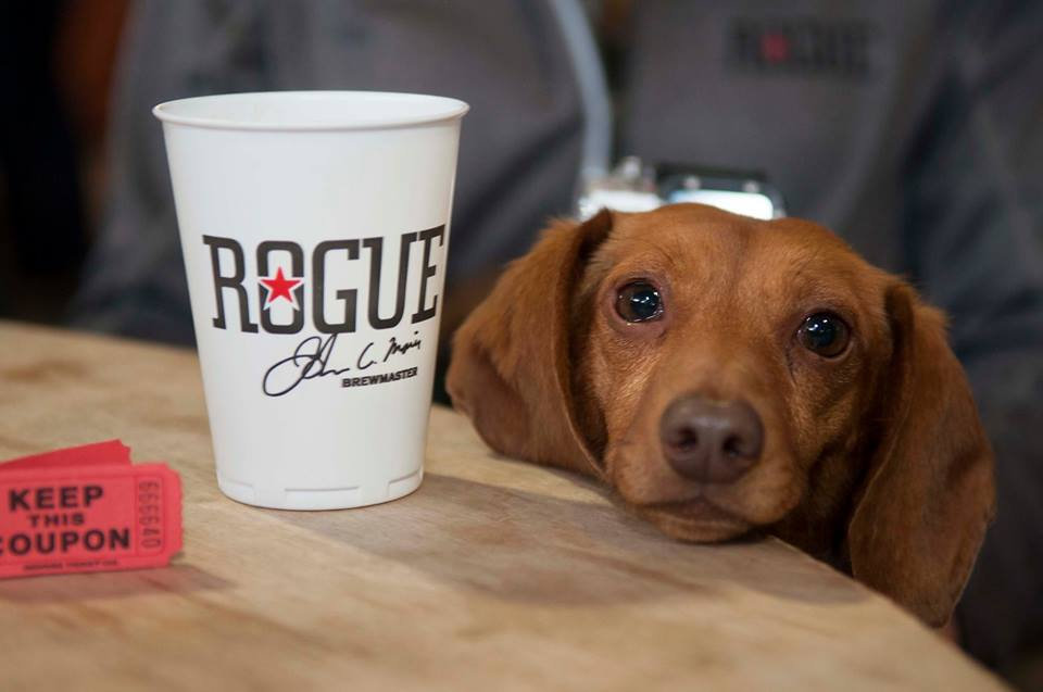 A pup waits patiently for its owner to return at Rogue Brewery