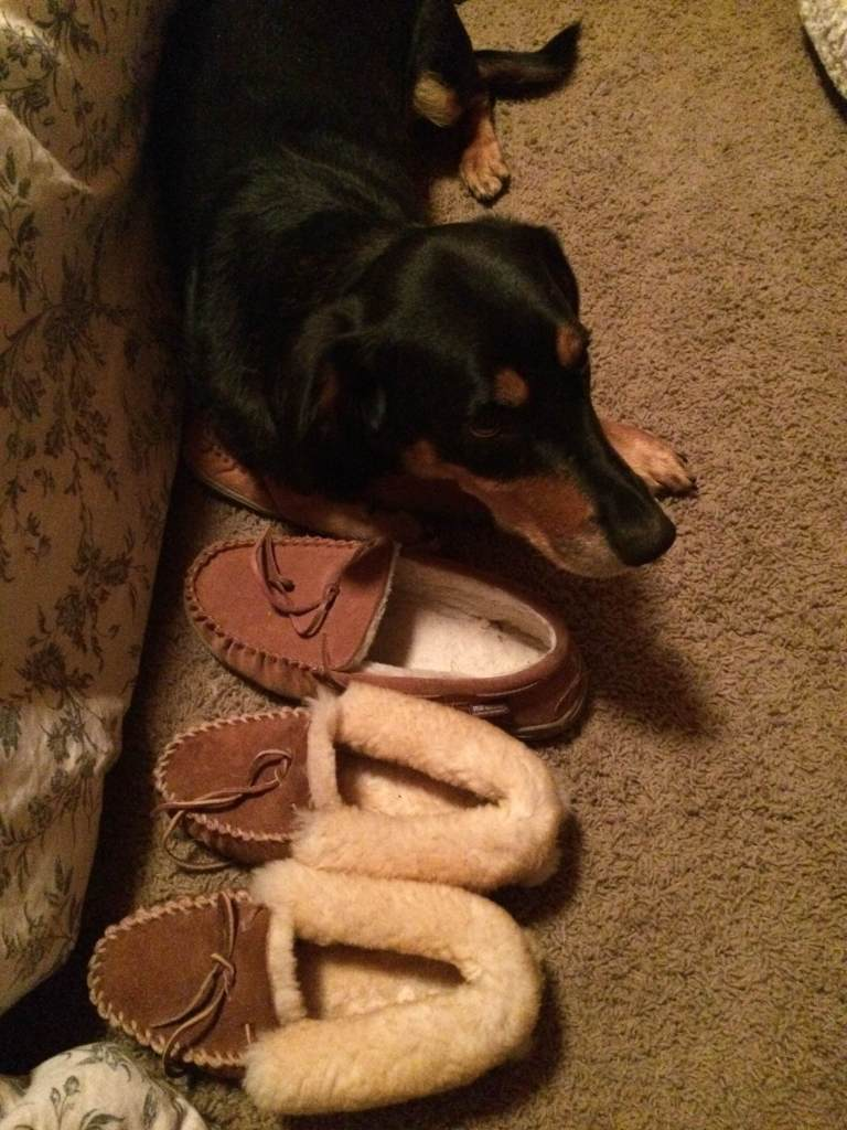 Zack's slippers and Mowgli