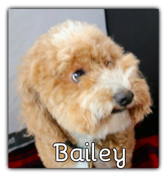 _Bailey.jpg