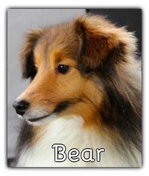 _Bear.jpg