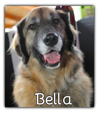 _Bella.jpg