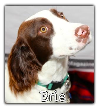 _Brie.jpg