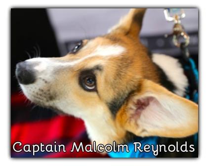 _Captain Malcolm Reynolds.jpg