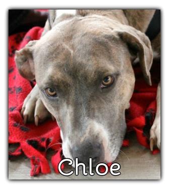 _Chloe.jpg