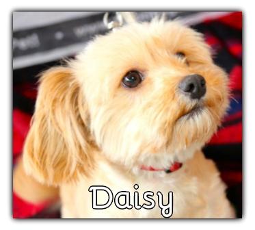 _Daisy.jpg