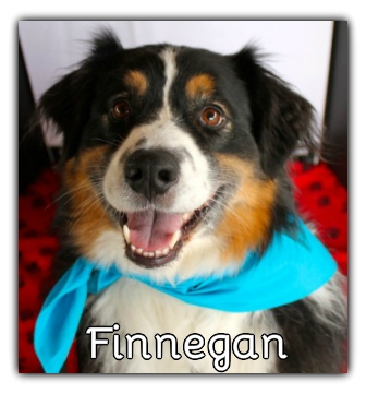 _Finnegan.jpg