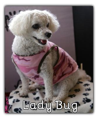 _Lady Bug.jpg