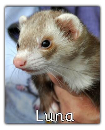 _Luna.jpg