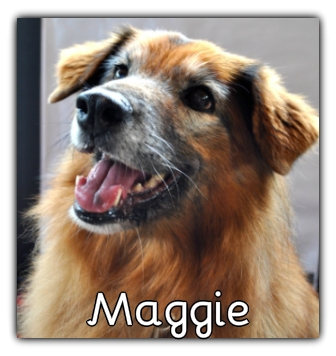 _Maggie_.jpg