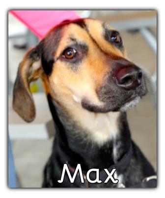 _Max.jpg