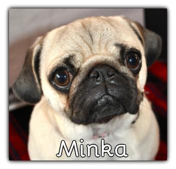 _Minka.jpg