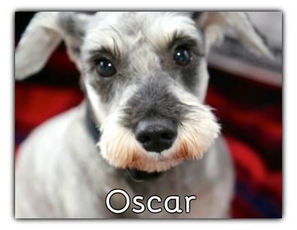 _Oscar.jpg