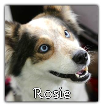 _Rosie.jpg