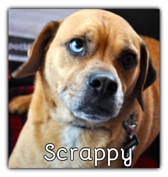 _Scrappy_.jpg