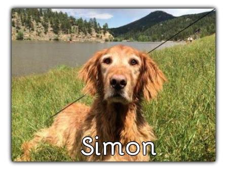 _Simon.jpg