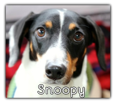 _Snoopy.jpg