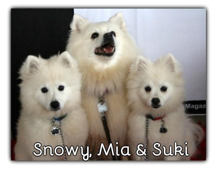 _Snowy_Mia_Suki.jpg