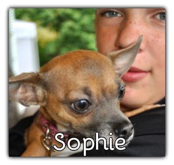 _Sophie.jpg