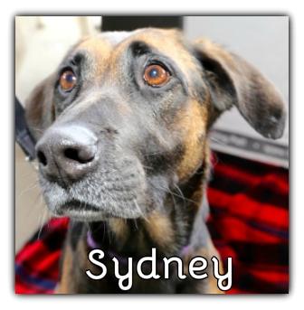 _Sydney.jpg