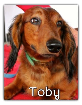 _Toby.jpg