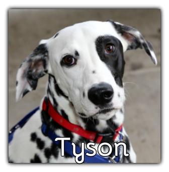 _Tyson.jpg