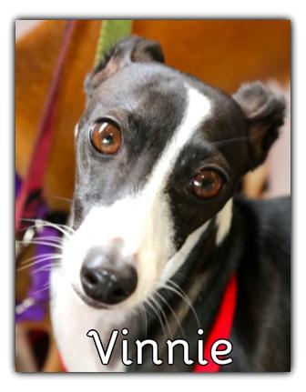 _Vinnie.jpg
