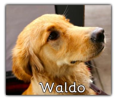 _Waldo.jpg