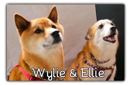 _Wylie_Ellie.jpg