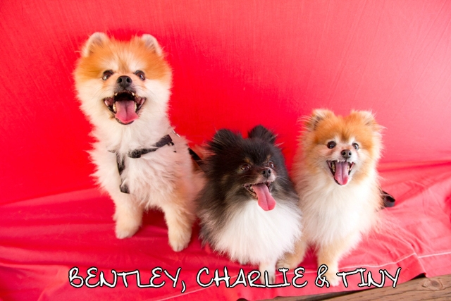Bentley_Charlie_Tiny_a_web.jpg