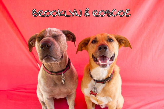 Brooklyn_Roscoe_a_web.jpg
