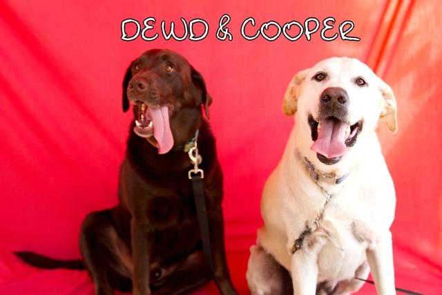 Dewd_Cooper_web.jpg