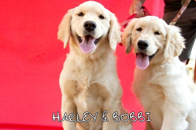 Harley_Bobbi_web.jpg