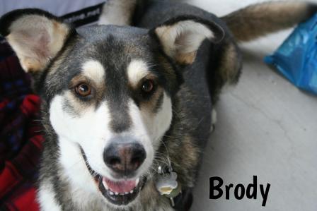 Brody.jpg