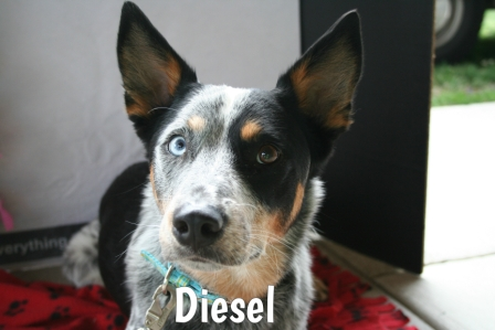 Diesel.jpg