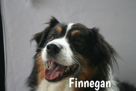 Finnegan.jpg